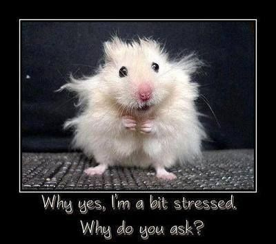 Wellness Wednesdays – And You Thought You Were Stressed?